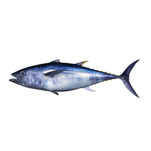 Market intelligence of Bigeye Tuna in the Canada