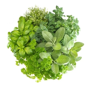 Herbs suppliers, wholesale prices, and global market