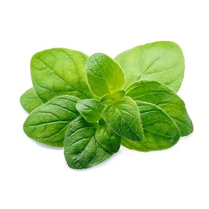 Market intelligence of Oregano in the South Africa
