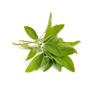 Common Sage suppliers, wholesale prices, and global market