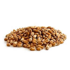Market intelligence of Winter Wheat in the Egypt