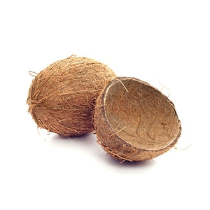 Market intelligence of Coconut Shell in the Canada