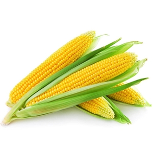Market Intelligence of Maize (Corn)