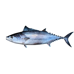 Market intelligence of Pacific Bluefin Tuna in the Malta
